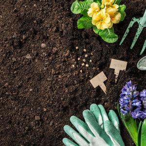 Hello June! Growing Your Garden