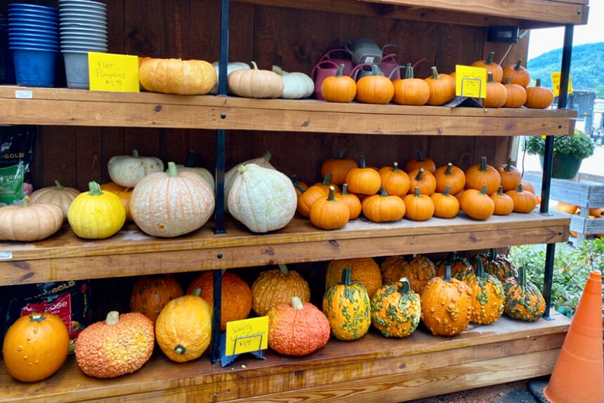 Fall at Marshall County Co-Op