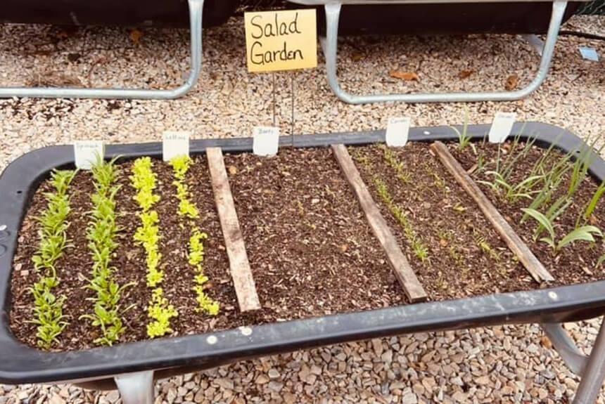 Marshall County Co-Op Salad Garden