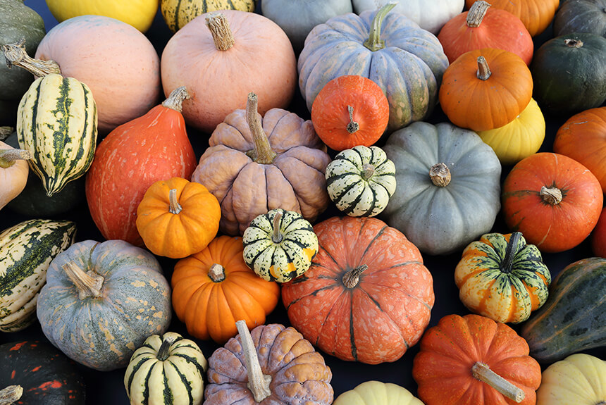 Pumpkins and Chickens